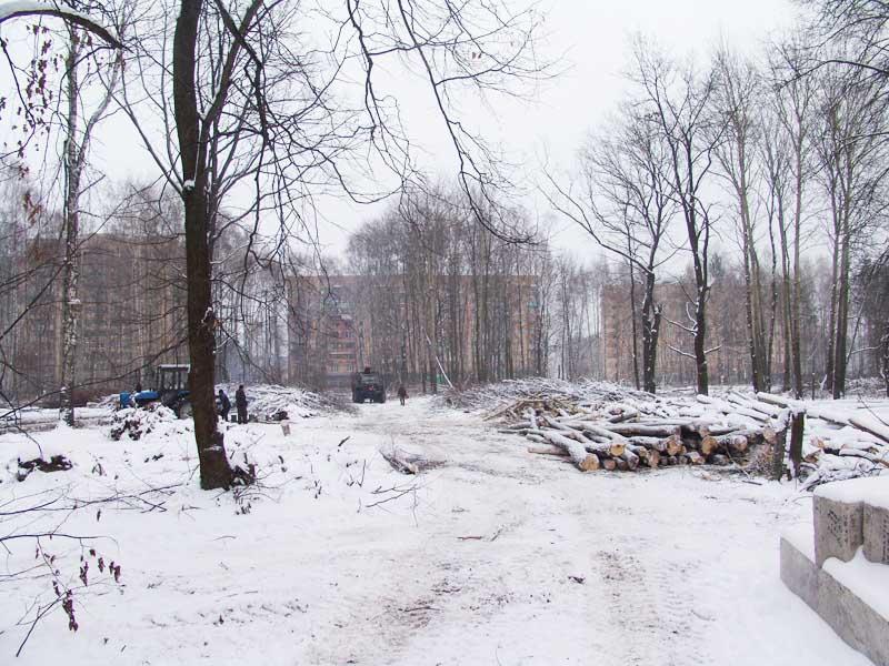 Варварская вырубка березовой рощи в городе Ступино